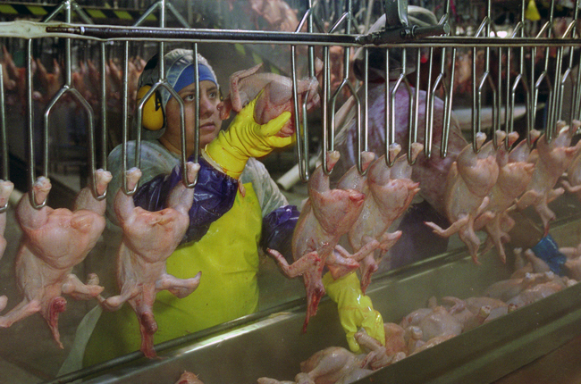 Poultry processing plants are 'houses of pain' for workers, says ...